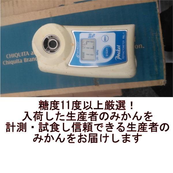 早生みかん 秀品 1箱5kg サイズL・M・S 熊本産 フルーツ グルメ fruitkanmiya-ggy 03