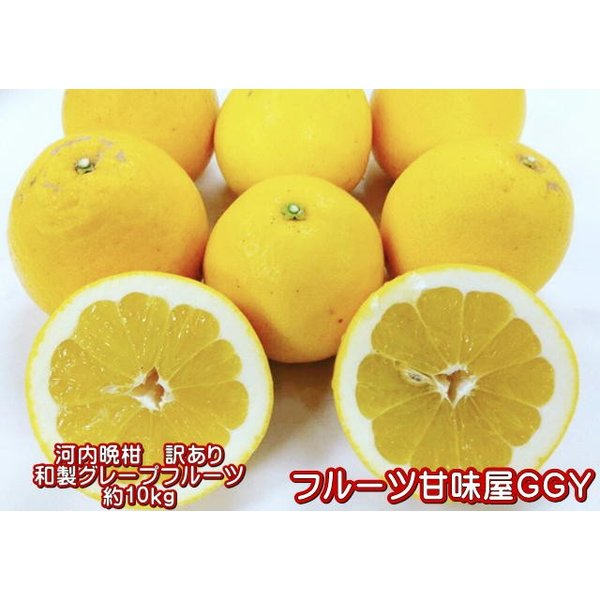 河内晩柑訳あり約10キロ(9kg+保証分500g)ジューシーオレンジ熊本産宇和ゴールド和製グレープフルーツみかんミカン蜜柑