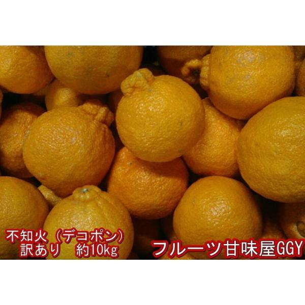 不知火 訳あり デコポンと同品種 熊本産 1箱 箱込10キロ(9kg+保証分500g)|fruitkanmiya-ggy