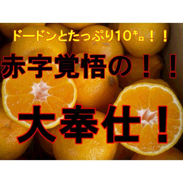 不知火 訳あり デコポンと同品種 熊本産 1箱 箱込10キロ(9kg+保証分500g)|fruitkanmiya-ggy|02