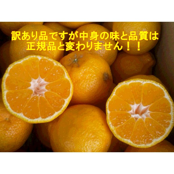 不知火 訳あり デコポンと同品種 熊本産 1箱 箱込10キロ(9kg+保証分500g)|fruitkanmiya-ggy|03