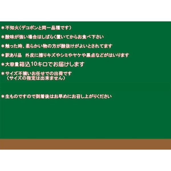 不知火 訳あり デコポンと同品種 熊本産 1箱 箱込10キロ(9kg+保証分500g)|fruitkanmiya-ggy|04