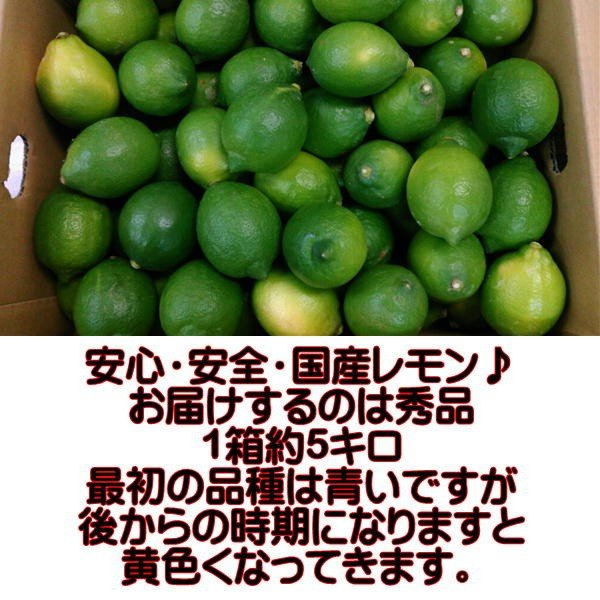 国産レモン 秀品 サイズ3L〜S 熊本産 1箱 箱込約5kg|fruitkanmiya-ggy|02