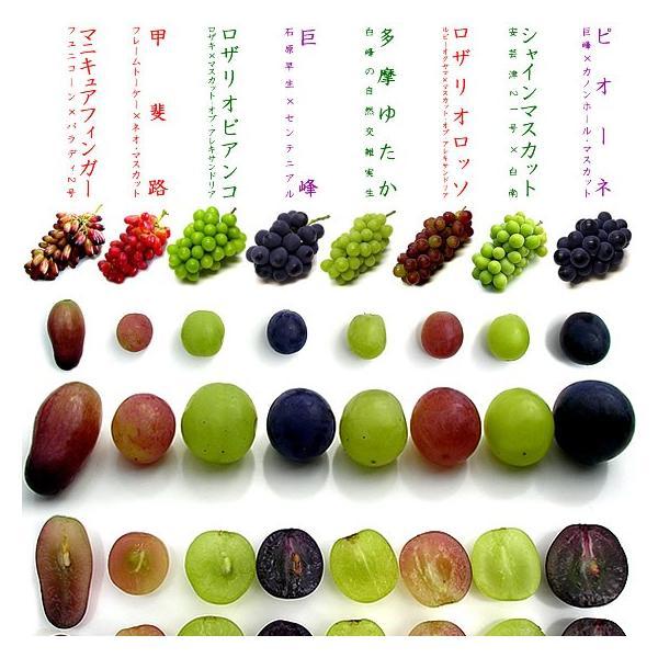 ぶどう 詰め合わせ おまかせ3種類セット 4kg 山梨県産  産地直送 送料無料一部地域を除く|fruits-line|04