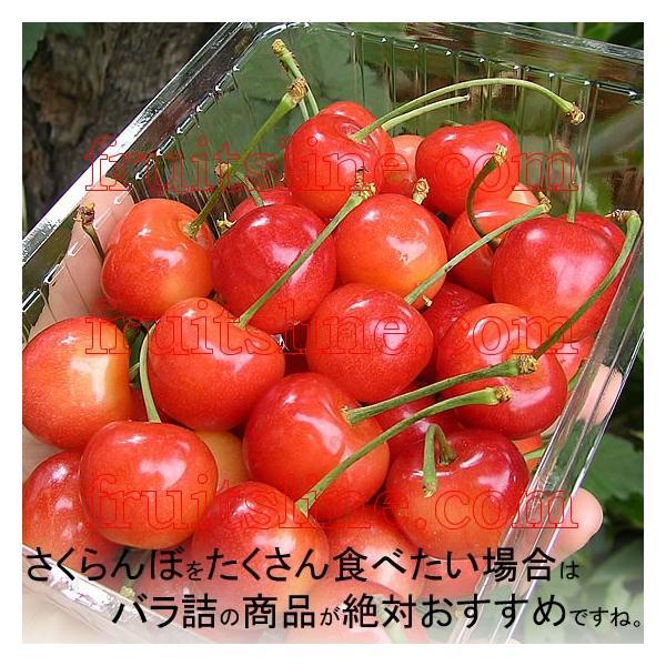 サクランボ さくらんぼ 紅秀峰 父の日 ギフト  秀 2L〜Lサイズ 500g バラ 送料無料 一部地域を除く fruits-line 11