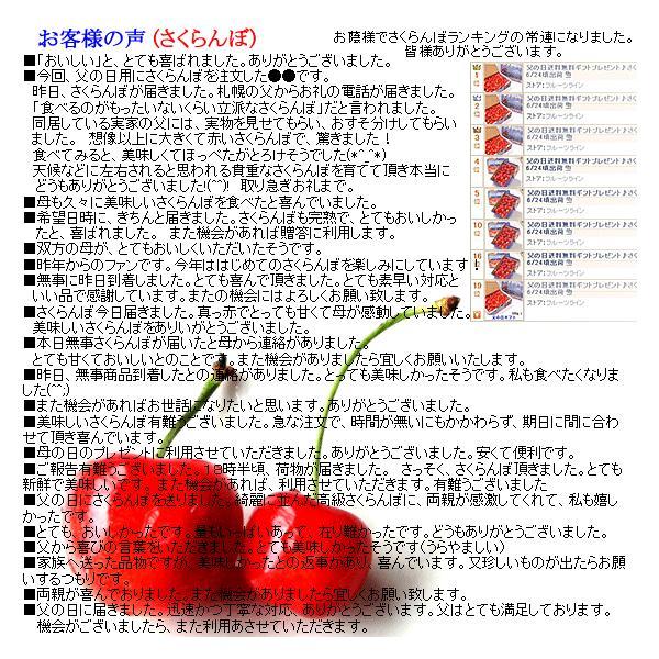サクランボ さくらんぼ 紅秀峰 父の日 ギフト  秀 2L〜Lサイズ 500g バラ 送料無料 一部地域を除く fruits-line 12