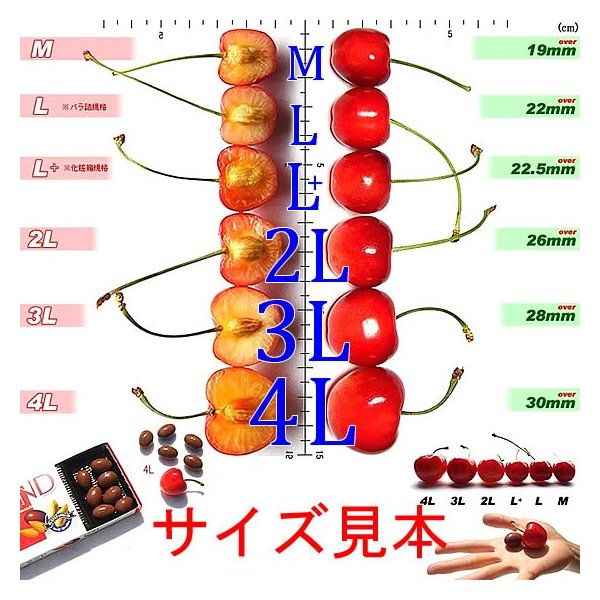 サクランボ さくらんぼ 紅秀峰 父の日 ギフト  秀 2L〜Lサイズ 500g バラ 送料無料 一部地域を除く fruits-line 04