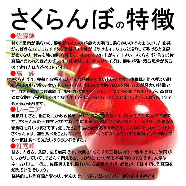 サクランボ さくらんぼ 紅秀峰 父の日 ギフト  秀 2L〜Lサイズ 500g バラ 送料無料 一部地域を除く fruits-line 05