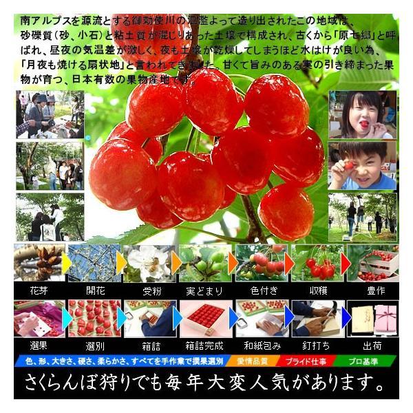 サクランボ さくらんぼ 紅秀峰 父の日 ギフト  秀 2L〜Lサイズ 500g バラ 送料無料 一部地域を除く fruits-line 06