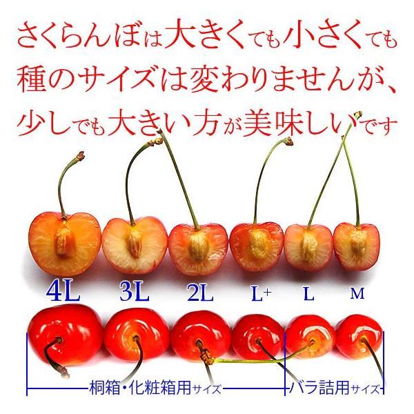 サクランボ さくらんぼ 紅秀峰 父の日 ギフト  秀 2L〜Lサイズ 500g バラ 送料無料 一部地域を除く fruits-line 08
