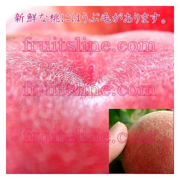 お中元 ギフト 桃 モモ もも 山梨県産 特産品 白鳳 白桃 甲斐黄金桃 特秀 1.5kg 送料無料 一部地域を除く fruits-line 15