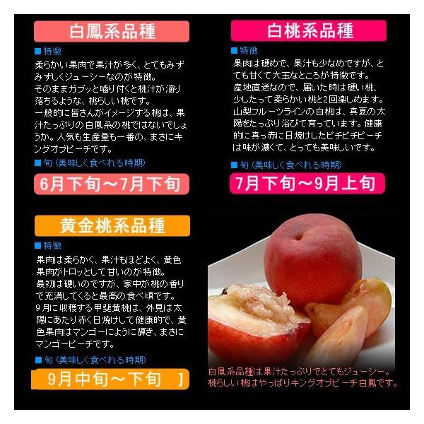 お中元 ギフト 桃 モモ もも 山梨県産 特産品 白鳳 白桃 甲斐黄金桃 特秀 1.5kg 送料無料 一部地域を除く fruits-line 08