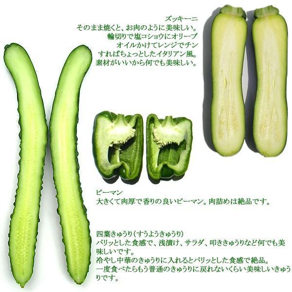 有機と旬で付き合う野菜セット 山梨県産 無農薬 無化学肥料 栽培野菜9品目詰め合わせ 送料無料 一部地域を除く|fruits-line|11