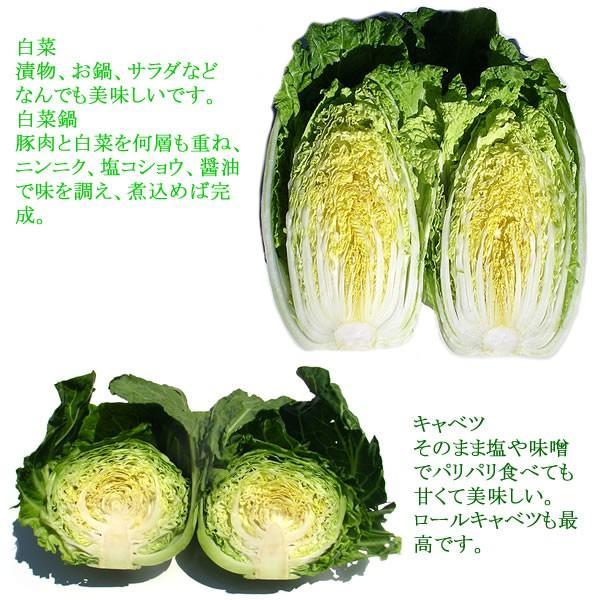 有機と旬で付き合う野菜セット 山梨県産 特産品 名物商品 無農薬 無化学肥料 栽培野菜9品目詰め合わせ 送料無料 一部地域を除く|fruits-line|12