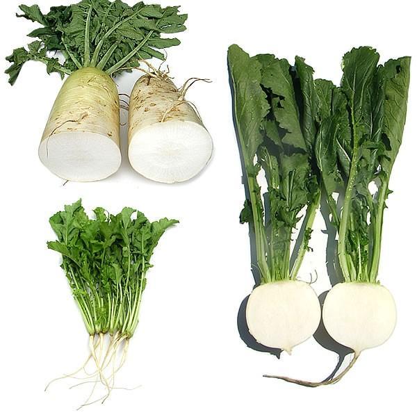 有機と旬で付き合う野菜セット 山梨県産 無農薬 無化学肥料 栽培野菜9品目詰め合わせ 送料無料 一部地域を除く|fruits-line|13