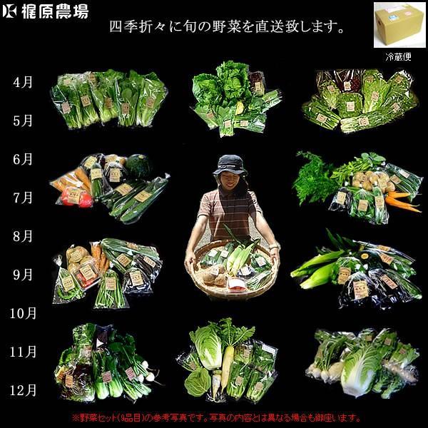 有機と旬で付き合う野菜セット 山梨県産 無農薬 無化学肥料 栽培野菜9品目詰め合わせ 送料無料 一部地域を除く|fruits-line|05