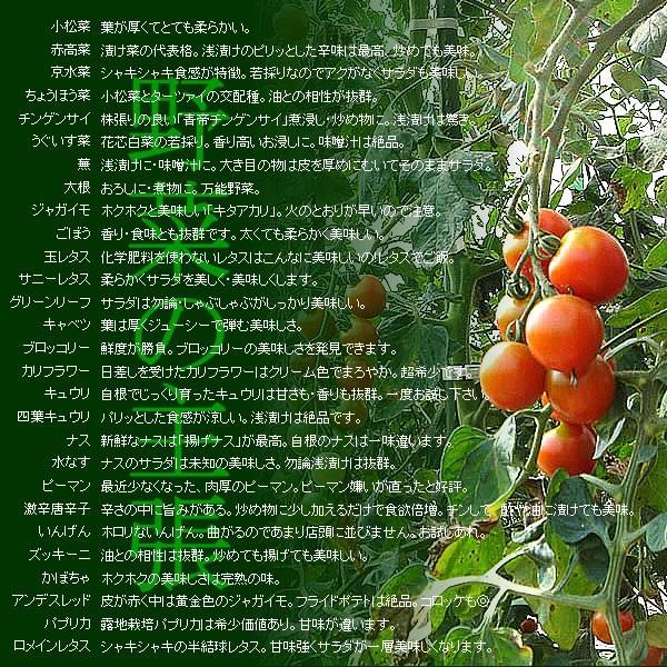 有機と旬で付き合う野菜セット 山梨県産 無農薬 無化学肥料 栽培野菜9品目詰め合わせ 送料無料 一部地域を除く|fruits-line|06