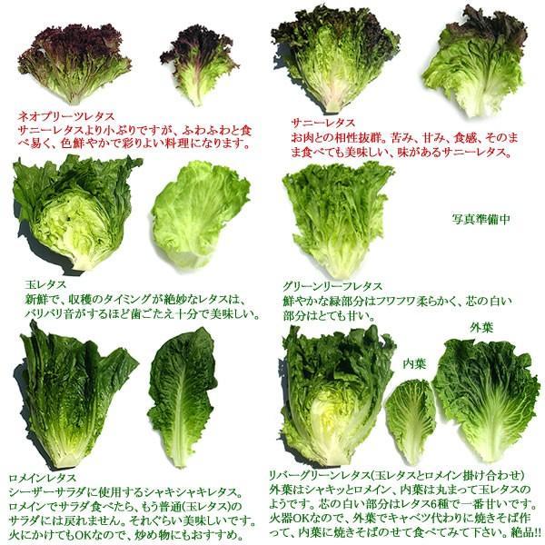 有機と旬で付き合う野菜セット 山梨県産 特産品 名物商品 無農薬 無化学肥料 栽培野菜9品目詰め合わせ 送料無料 一部地域を除く|fruits-line|08