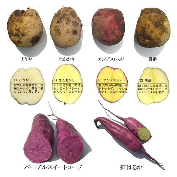 有機と旬で付き合う野菜セット 山梨県産 特産品 名物商品 無農薬 無化学肥料 栽培野菜9品目詰め合わせ 送料無料 一部地域を除く|fruits-line|09