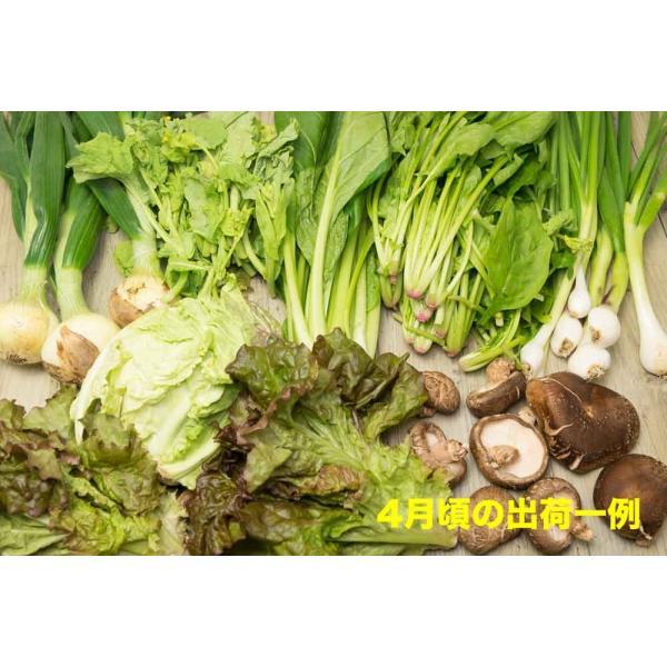 [クール便無料] 江見さん家の野菜BOX 自然農法 有機JAS (岡山県 江見農園) 産地直送|fs21|03