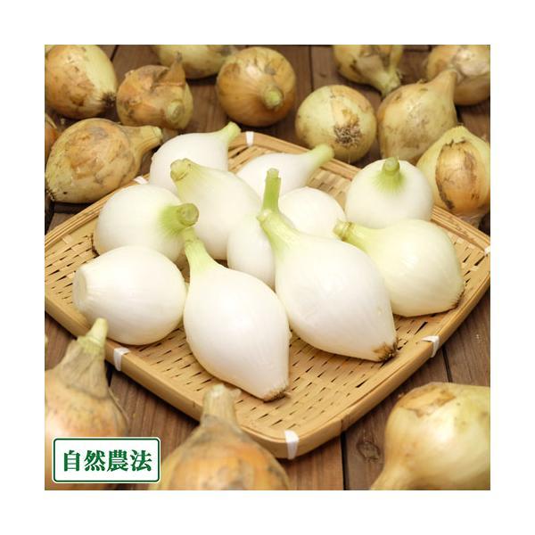 【クール便・セール】玉ねぎ 3kg (2S〜3Sサイズ) 自然農法 (兵庫県淡路島 花岡農恵園) 産地直送