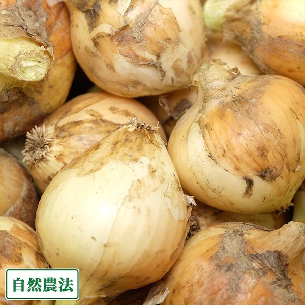 【サイズ混合】 無肥料栽培 玉ねぎ 3kg 自然農法 (兵庫県淡路島 花岡農恵園) 産地直送