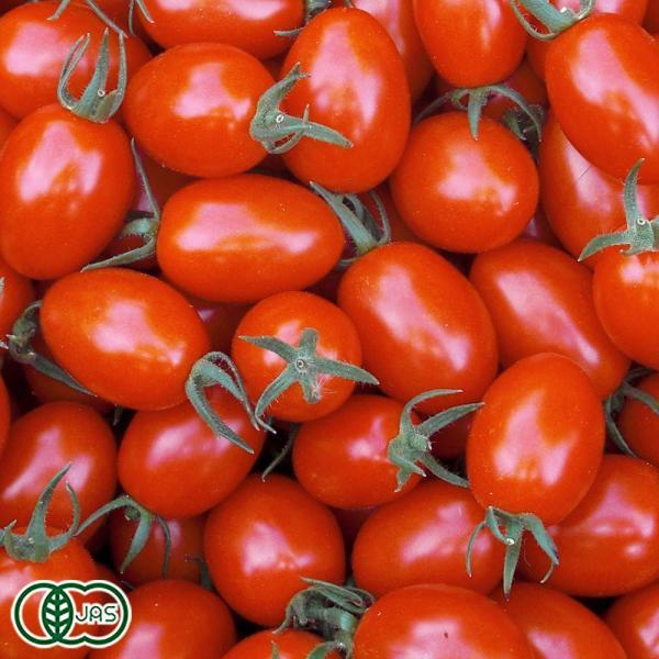 【クール冷蔵便】限界突破ミニトマト A品 3kg 有機JAS (高知県 ラッキー農園) 産地直送|fs21