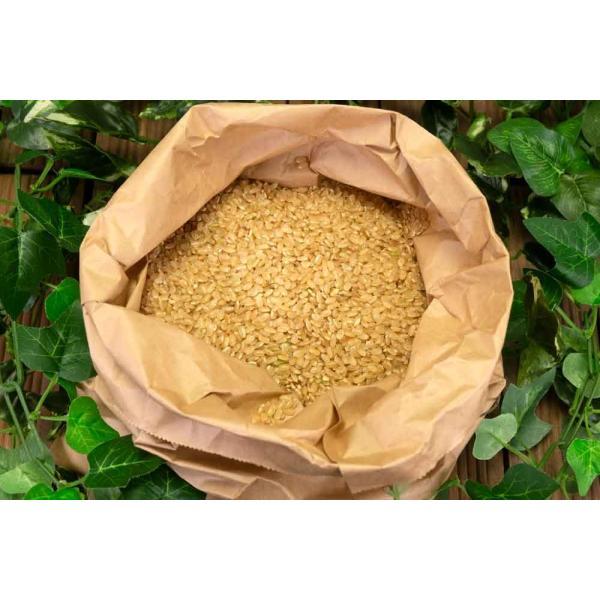 お米 30年度米 つがるロマン 玄米 10kg 無農薬 (青森県 小田農園) 産地直送|fs21|06