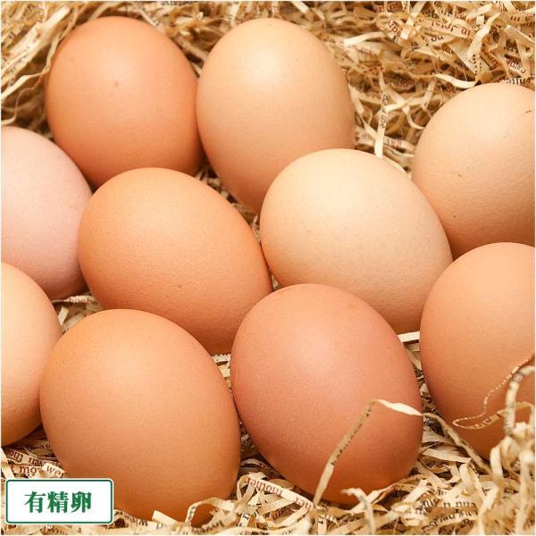 有精卵 40個箱詰め(北海道 卵ラン農場ムラタ)健康有精卵・送料無料・産地直送|fs21