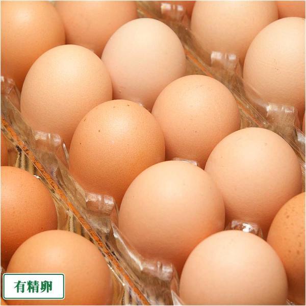 有精卵 1パック(10個入)×6パック(北海道 卵ラン農場ムラタ)健康有精卵・送料無料・産地直送