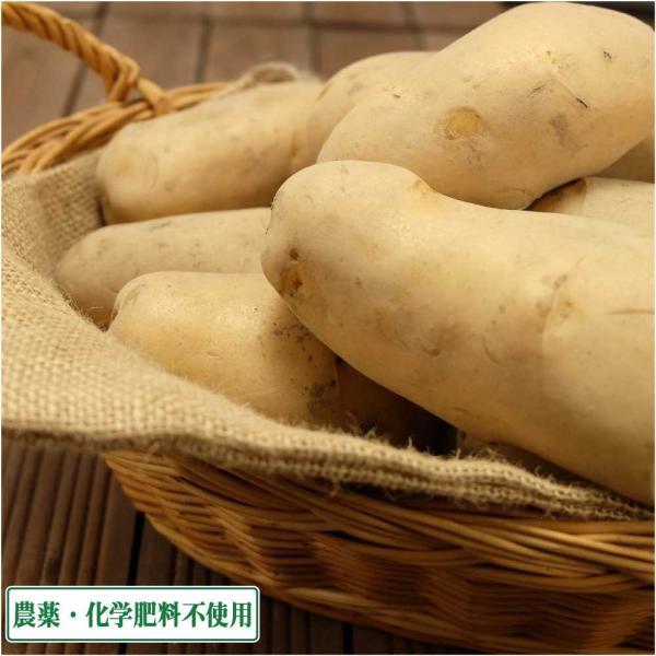 サイズ混合 じゃがいも メークイン 10kg(北海道 (株)斎藤農場) 産地直送 有機JAS転換期間中