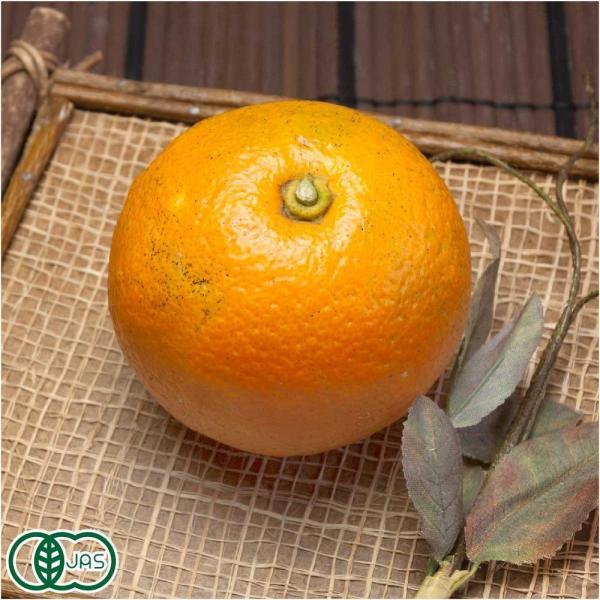 有機 橙(だいだい) 4kg 有機JAS (佐賀県 佐藤農場株式会社) 産地直送