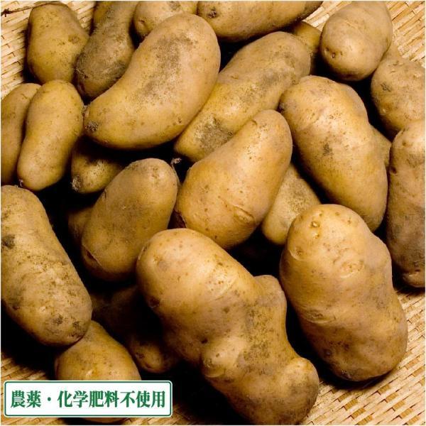 メークイン 10kg 農薬不使用 (青森県 須藤農園) 産地直送