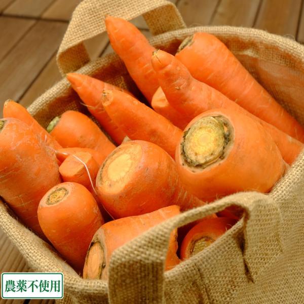 【クール冷蔵便・訳あり】 にんじん 10kg箱 無農薬 (ふるさと2...