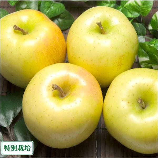 早生りんご(黄) A品 10kg箱 特別栽培 (青森県 田村りんご農園) 産地直送