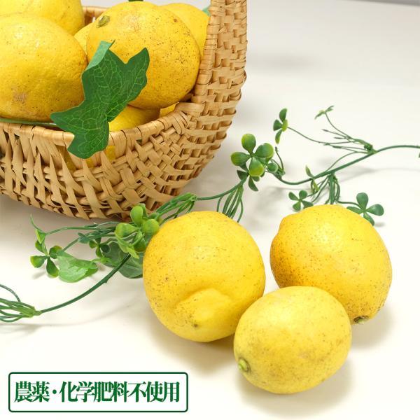 広島県産(とびしま)レモン 5kg 無選別 自然農法登録中 (広島県 とびしま農園) 産地直送|fs21