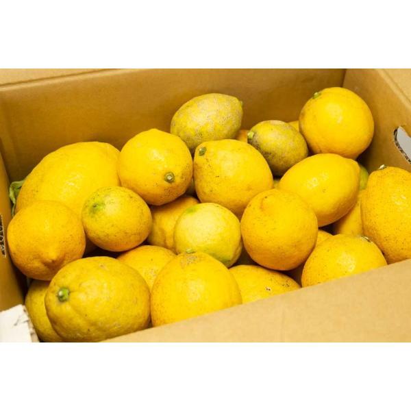 広島県産(とびしま)レモン 5kg 無選別 自然農法登録中 (広島県 とびしま農園) 産地直送|fs21|02