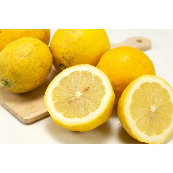広島県産(とびしま)レモン 5kg 無選別 自然農法登録中 (広島県 とびしま農園) 産地直送|fs21|03