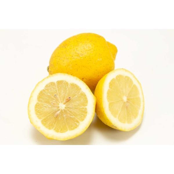 広島県産(とびしま)レモン 5kg 無選別 自然農法登録中 (広島県 とびしま農園) 産地直送|fs21|04