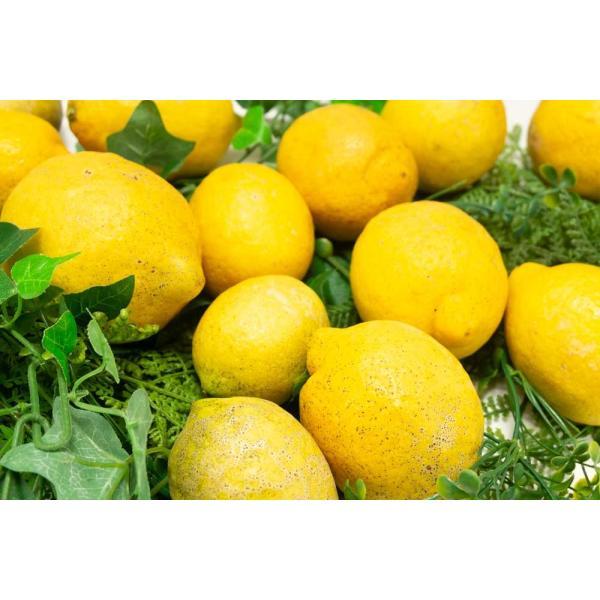 広島県産(とびしま)レモン 5kg 無選別 自然農法登録中 (広島県 とびしま農園) 産地直送|fs21|05