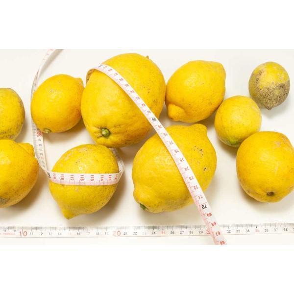 広島県産(とびしま)レモン 5kg 無選別 自然農法登録中 (広島県 とびしま農園) 産地直送|fs21|06
