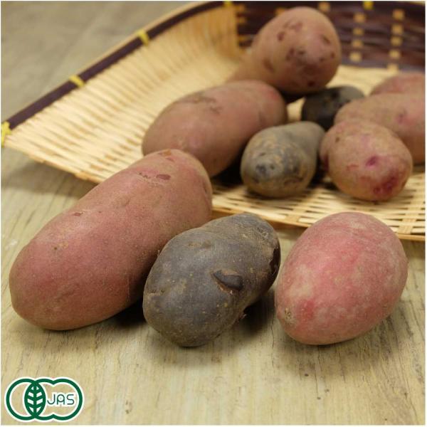 3種のカラフルポテト 3kg 有機JAS (熊本県 (株)肥後やまと) 産地直送