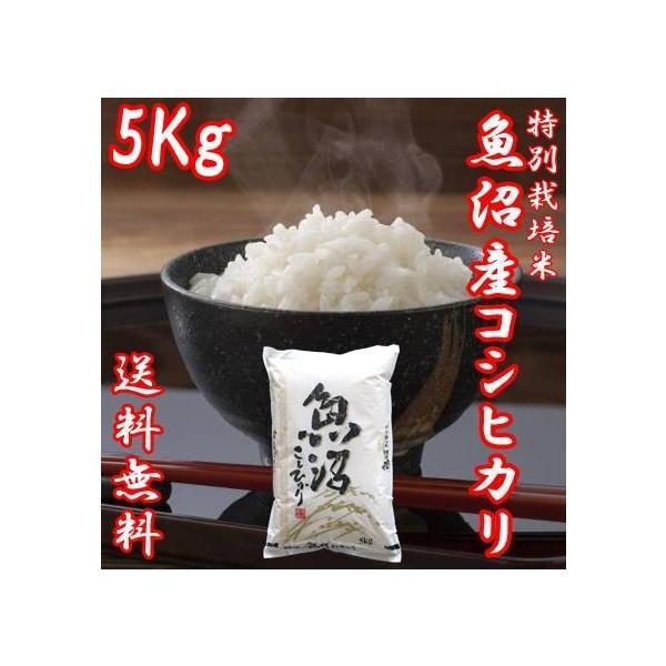 米 お米 5kg 令和2年産 新米 コシヒカリ 魚沼産 贈答用 新潟県 白米 送料無料|fujimakisanchi
