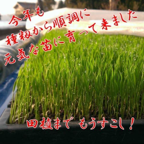 米 お米 5kg 令和2年産 新米 コシヒカリ 魚沼産 贈答用 新潟県 白米 送料無料|fujimakisanchi|03