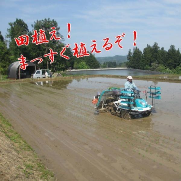 米 お米 5kg 令和2年産 新米 コシヒカリ 魚沼産 贈答用 新潟県 白米 送料無料|fujimakisanchi|05