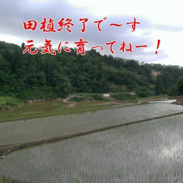 米 お米 5kg 令和2年産 新米 コシヒカリ 魚沼産 贈答用 新潟県 白米 送料無料|fujimakisanchi|06