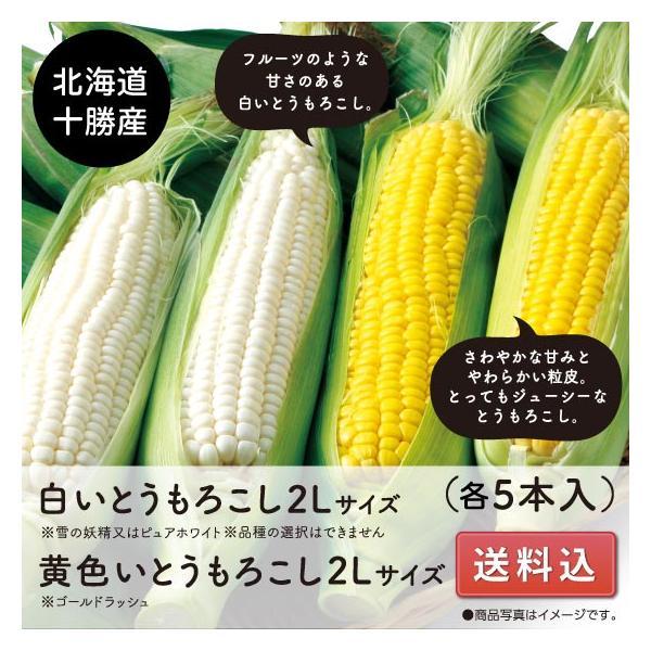 とうもろこし ゴールドラッシュ 白いとうもろこし 送料込 北海道十勝産 2Lサイズ各5本 8月下旬以降発送開始予定