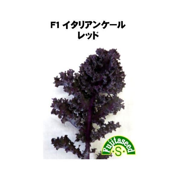 野菜 タネ 種 F1イタリアンケール レッド 藤田種子|fujitaseed