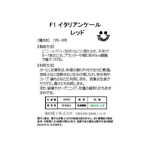 野菜 タネ 種 F1イタリアンケール レッド 藤田種子|fujitaseed|02
