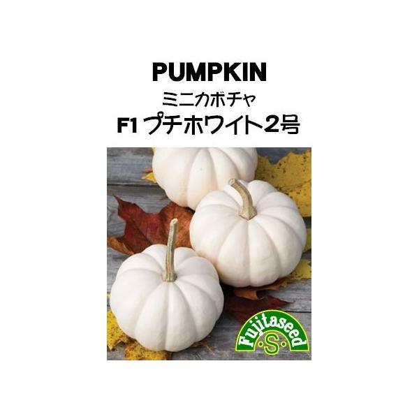 野菜 タネ 種 ミニカボチャ F1 プチホワイト2号 藤田種子|fujitaseed